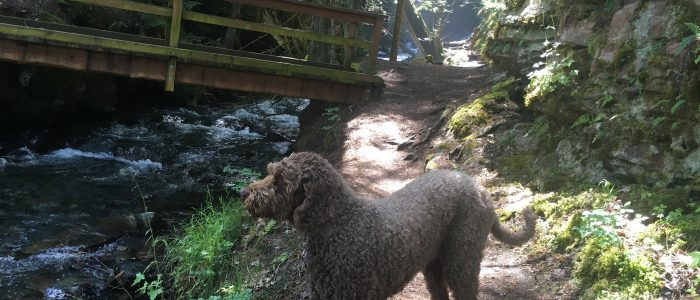 Scout near the footbridge over Fletcher Creek