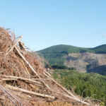 Forest fibres an economic opportunity?